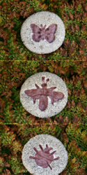 Clay Magnets: Fossil Insects