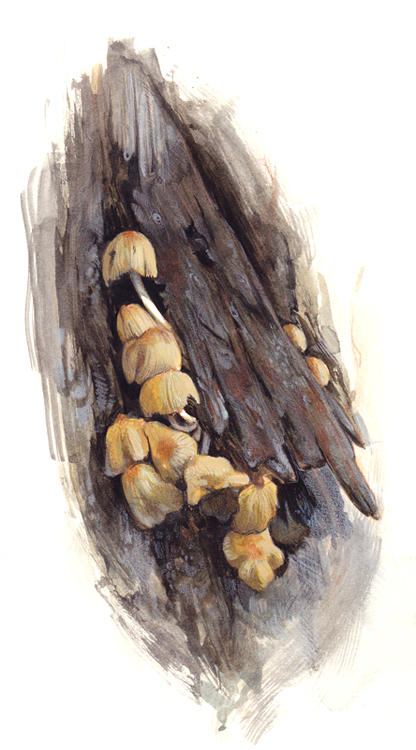 Field Study - Lil Mushrooms