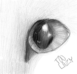 Cat eye wooooo