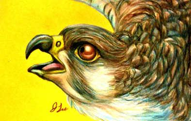Alert Falcon