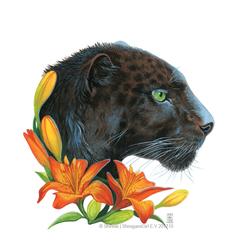 Panthera Lilium
