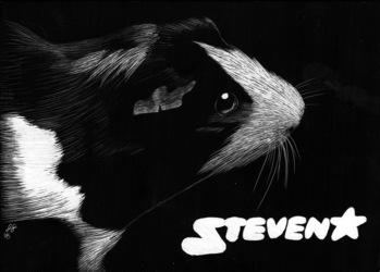 Steven scratchboard