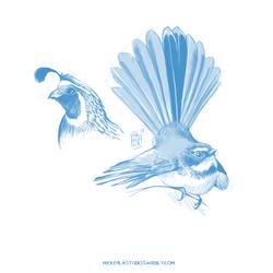 Bird Sketches