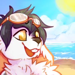 Beach Bun (Goggles)