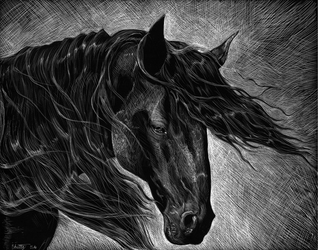 Scratchboard Horse in the Wind