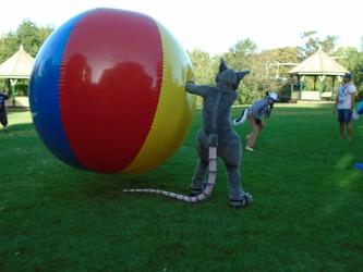 Rattus having a ball