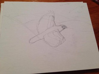 Red Tailed Hawk WIP