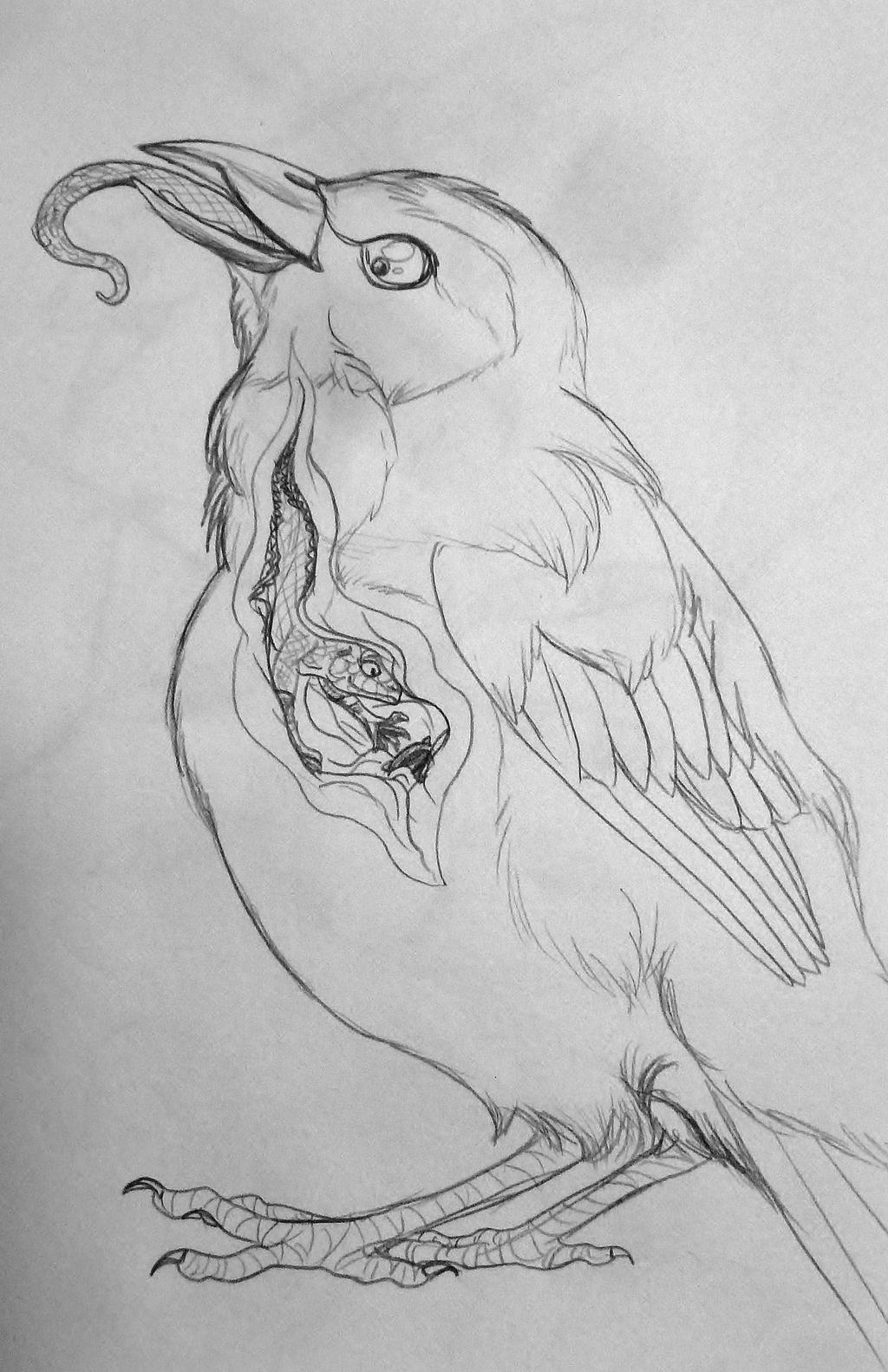 Bird Belly Doctor Extraordinaire