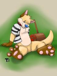 Dingoroo