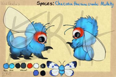 Chalcosia thaivana owadai Mothitty [com]