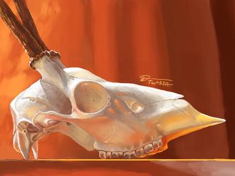 Sunshine Skull [3DS]