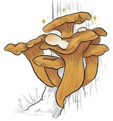 Mayshroom 8