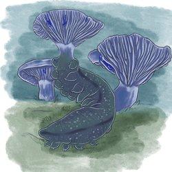 Mayshroom Indigo milkcap