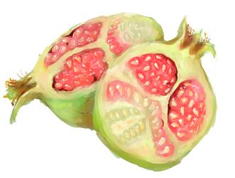 pomegranate speed Paint