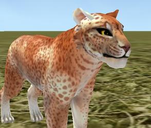 Feral Heart Leopard Preset