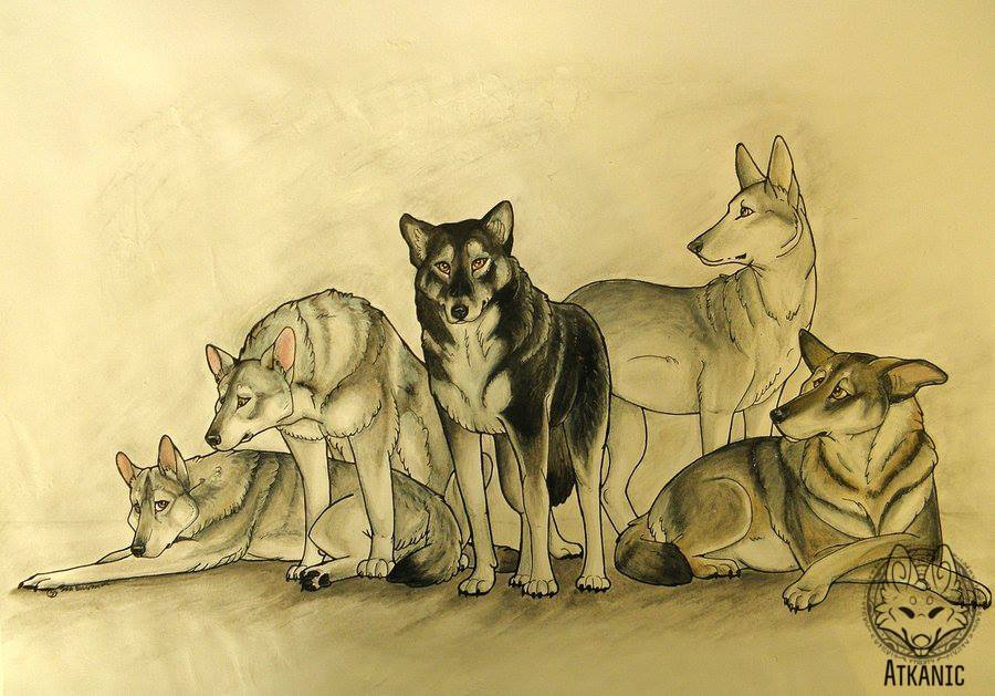 Dog stylised drawing