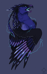 C: Yldornis