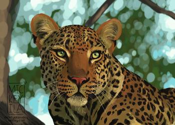 Leopard Speedpaint