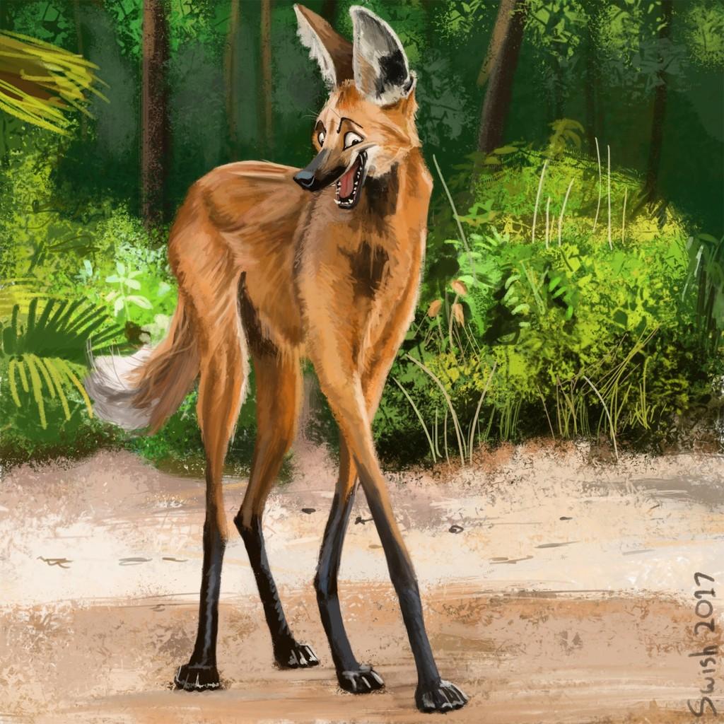 Most recent image: Long legs