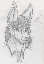 Headshot #1: Random Fox