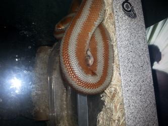 Sleeping Snake - Near Water