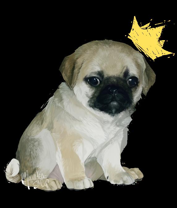 Pug Prince
