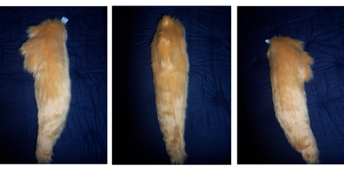 Shiny Poochyena Tail *For Sale*