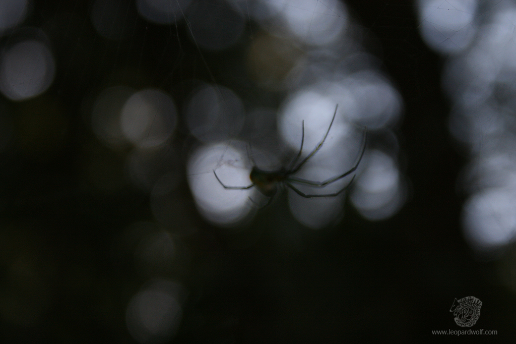 Featured image: Spooky Orchard Spider 1