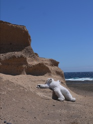 Subathing in Tenerife, Spain Polar Bear cute!