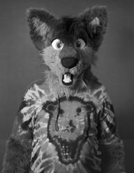 Coyote Provocateur