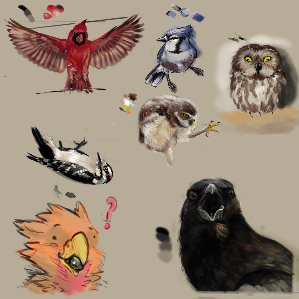 So Many Birds