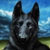 avatar of Blackshepard