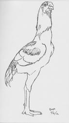 Shamo Rooster