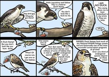 Duck Stamp Comic