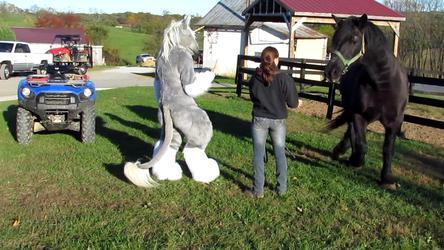 VIDEO: Equus Meets Caladhin