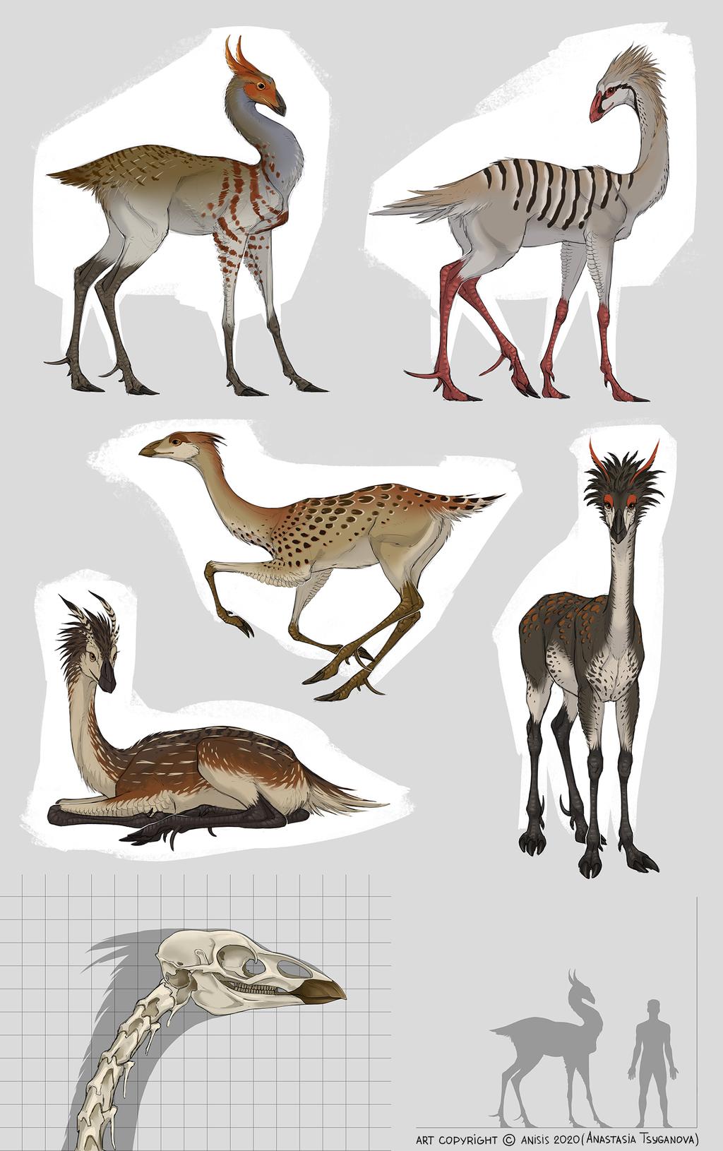 Kamma birds