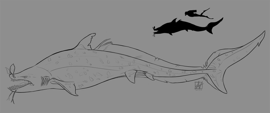 Eel Shark