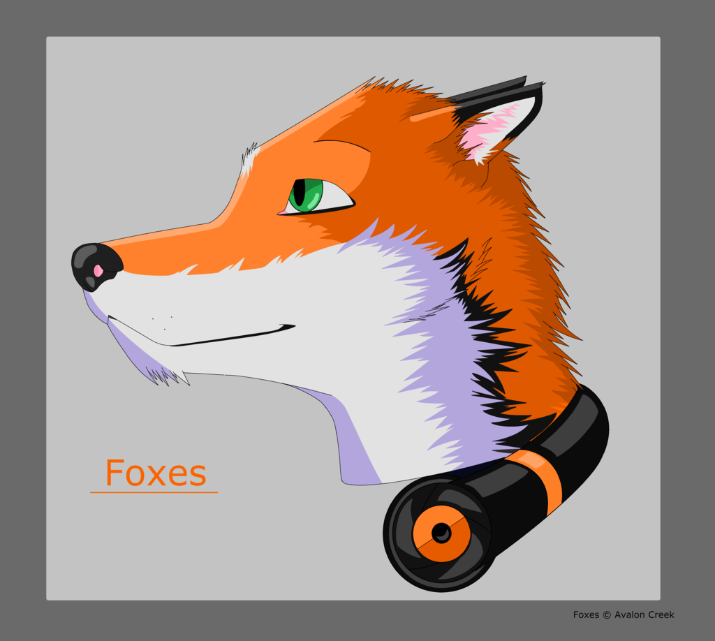 Most recent image: Foxes
