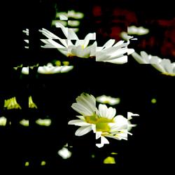 Dharma Flower