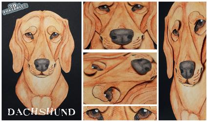 3D - Portraits: Dachshund