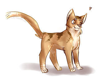 a cate
