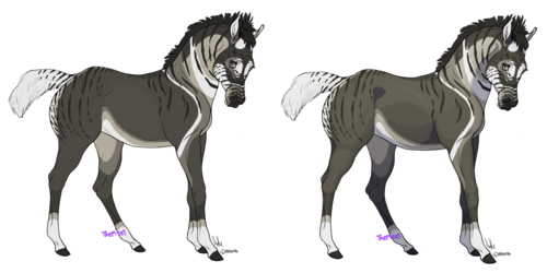 Coontail (Contest Gift)