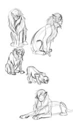 Sphinxes - Figure drawings