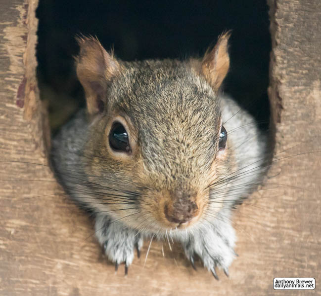 At home with Mr Squirrel