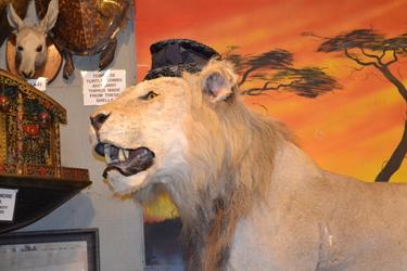 just lion around. :D