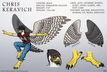 Peregrine Falcon Ref Sheet