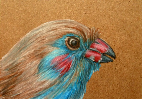 ACEO--Unknown Bird Portrait