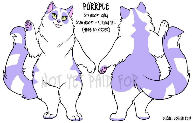 SOLD! Purrple - Longhair Cat Adopt