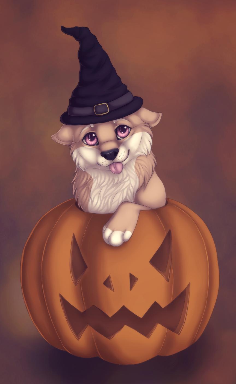 Most recent image: Pumpkin Shibe