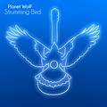 Planet WolF - Strumming Bird